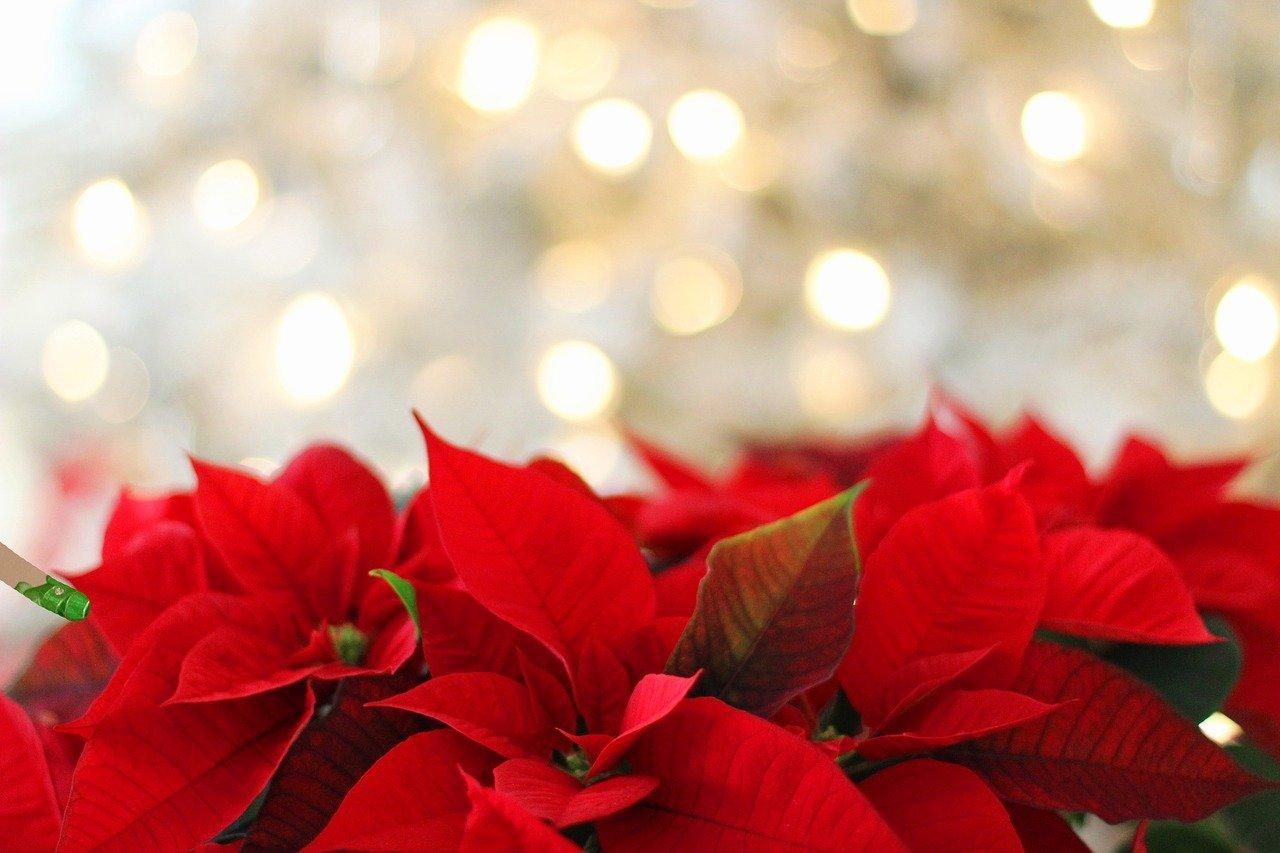 decoración de navidad rojo